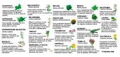 Guía de plantas y hierbas aromáticas y sus propiedades