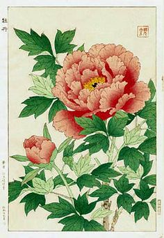 Peony, Red  by Kawarazaki Shodo  (published by Unsodo)