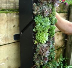 http://www.uzplanters.com/collections/vertical-gardens/products/grovert-vertical-wall-garden (EASY TO MOUNT AND TAKE OFF)