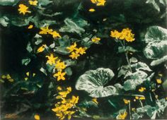 """moonlit marsh marigolds / jessie's stream 16"""" x 22"""" micheal zarowsky watercolour on arches paper private collection Marsh Marigold, Arches Paper, Moonlight, Paintings, Watercolor, Water, Pen And Wash, Watercolor Painting, Paint"""