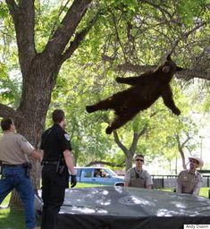 콜로라도 대학교 하늘에서 다시 한 번 곰이 내렸다(사진)