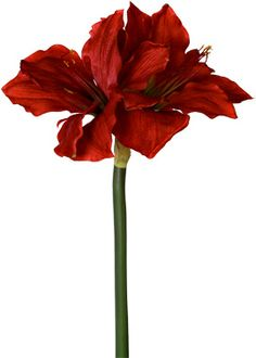 Artificial Faux Red Amaryllis Silk Flowers Winter Christmas Bouquets-also has white Amaryllis