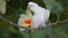 Philippines: coal plant threatened cockatoos (petition)