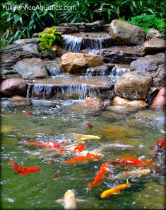 Waterfall with koi swimming beneath it. Designed and installed by Full Service Aquatics of Summit, NJ 07901