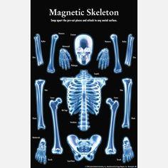 Fab.com | Magnetic Skeleton