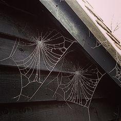 Frosty spider web!