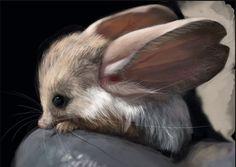 Je vous présente une Gerboise à longues oreilles! http://www.humanosphere.info/2015/06/je-vous-presente-une-gerboise-a-longues-oreilles/ via @humanosphere