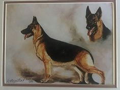 RUTH MAYSTEAD PRINT~ GERMAN SHEPHERD  DOG  ~ NEW ~ SIGNED ~ LIMITED ADDITION