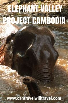 Elephant Valley Project Mondulkiri, Ethical Elephant Sanctuary in Cambodia
