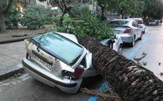 Cronaca: #Roma #forte #maltempo: albero cade su uno scuolabus 3 feriti anche una bimba (link: http://ift.tt/2e473XD )