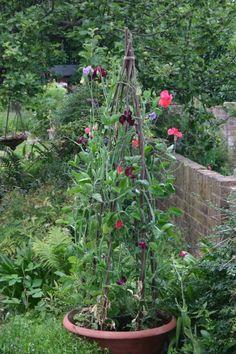 Being Creative: fabulous gardening blog