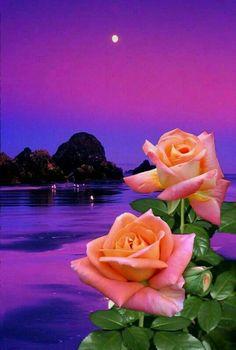 Csodálatos fotó.. A hold és a gyönyörű rózsák