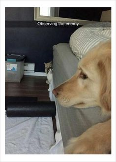 observing the enemy funny dog memes