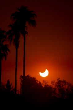 Annular Solar Eclipse Among Palms - Skywatcher Chris Fabri took this image of the annular solar eclipse on May 20, 2012 from North Phoenix. He took the image as the sun gave its last view before setting.