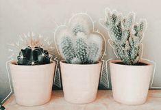 Cacti And Succulents, Planting Succulents, Planting Flowers, Cactus Plante, Plants Are Friends, Plant Aesthetic, Cactus Y Suculentas, Echeveria, Indoor Plants
