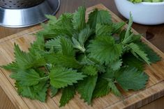 Stinging Nettle has been a staple in herbal medicine since ancient times. The Ancient Egyptians used stinging nettle to treat arthritis and back pain, while the Romans rubbed it on themselves to help stay warm. Nettle Leaf Benefits, Nettle Leaf Tea, Bay Leaf Tea Benefits, Hair Remedies, Herbal Remedies, Natural Cures, Natural Health, Hair Loss Cure, Bay Leaves