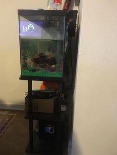 Aquarium Tank With Stand