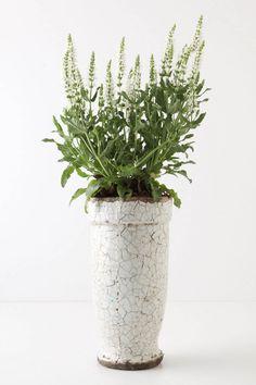 Ivory Epoch Pot, Pedestal. Just got 2 of these and love them!!!   $14 #anthropolgie