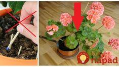 Nemusíte do črepníkov pichať zápalkové hlavičky, toto je lepšie riešenie. Flowers, Anna, Gardening, Decor, Decoration, Lawn And Garden, Decorating, Royal Icing Flowers, Flower