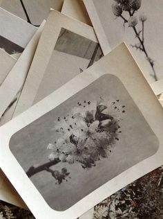 Vintage Flowers & Plants Photographs Instant Collection: Gardenista