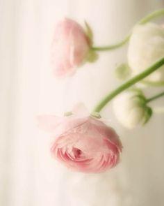 Pale Pink Flower Photograph - white, vintage, pastel, love, flower photograph. $30.00, via Etsy.