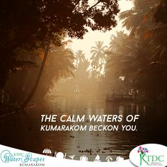 The calm waters of #Kumarakom beckon you.