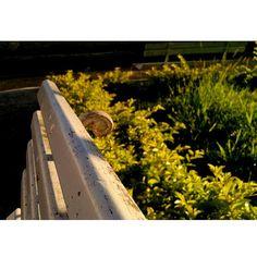 No banco a esperar #instashot #nocrop #colors #colorful #foco #macrolovers #macro #shadows #shine #sun #igersES #igers #ig_espiritosanto #picoftheday #pixrlexpress #pixrl #eucurtomotorola #motofoto #notfilter #epic_capture #TagsForLikes #enjoy #nature #green #gardener