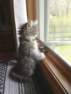 If theres a window theres also a way out of it. | 21 Inspirational Quotes From Kittens