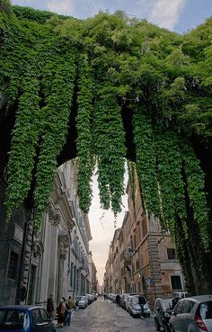 Lovely leaves at Via Giulia, Rome, Italy. For Rome recommendations head on to theculturetrip.com