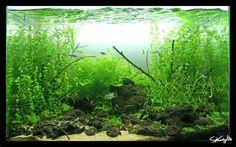 aquascape - Bing Images