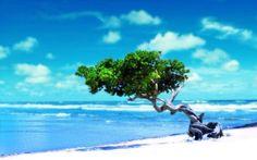 Pure paradise, beautiful tree on a deserted beach