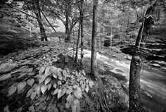 Great Smoky Mt. National Park Collection Archives - Clyde Butcher | Black & White Fine Art Photography