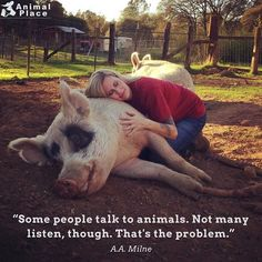 "463 Likes, 4 Comments - Animal Place (@_animalplace) on Instagram: ""Photo: @veganroni *⠀ *⠀ *⠀ *⠀ *⠀ *⠀ #love #instalove #vegan #vegansofinstagram #vegansofig…"""