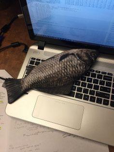 "This fish PENCIL POUCH (<a href=""http://www.amazon.com/Mackerel-Zipper-Pouch-Weird-Pencil/dp/B00WW1MAIA"" target=""_blank"">$20</a>)."