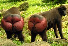6 Animals That Prove Nature Has a Childish Sense of Humor