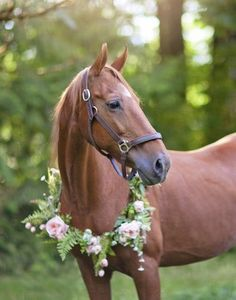Check out Sasha's profile on AllPaws.com and help her get adopted! Sasha is an adorable Horse that needs a new home. https://www.allpaws.com/adopt-a-horse/saddlebred/6679051?social_ref=pinterest