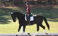 Casanova ISF - Stunning 17 hand, black 2007 KPWN gelding out of Rabiola (Grand Champion multiple times's DAD) and Rampal! Very impressive with three good, forward thinking gaits. Light in the hand. Going 2nd level $45,000
