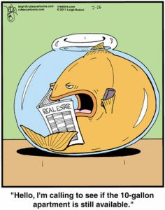 You may have been told that a fish will never outgrow its tank, and, while not true, this misinformation is perpetuated by fact.