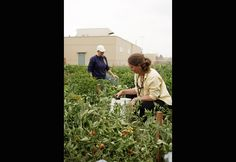Female prisoners find their green thumbs. Gardening behind bars offers them a fresh chance. [By Michele Wilson Berger/Photograph by John Vall]