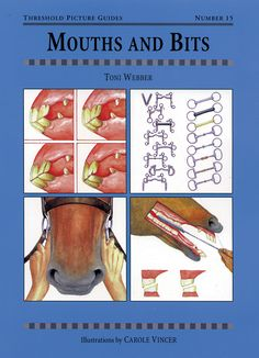 MOUTHS AND BITS (Threshold Picture Guides): A step-by-step guide to the horse's mouth and the principles of bitting Horse Bits, Horse Tack, Horse Harness, Horse Information, Animal Reiki, Horse Exercises, Horse Care Tips, Horse Riding Tips, Horse Anatomy