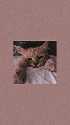 Source by videos wallpaper cat cat memes cat videos cat memes cat quotes cats cats pictures cats videos Wallpaper Gatos, Tier Wallpaper, Cute Cat Wallpaper, Locked Wallpaper, Cute Wallpaper Backgrounds, Animal Wallpaper, Cute Cartoon Wallpapers, Pretty Wallpapers, Handy Wallpaper