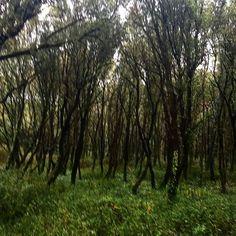 【miumiu_jam】さんのInstagramの写真をピンしています。《森 #森 #木 #林 #緑 #草 ##france #landscape #wood #foret #green #nature #フランス》