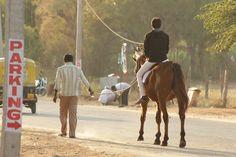 Deepak D Rock Full Masti and Horse Ride at Gumbaz, Srirangapatna, Mysore.   #DeepakDRock #Deepak #Model #Hero #Style #Mysore #Gumbaz #HorseRide #Horse #Ride #Srirangapatna #Photoshoot #Masti #Enjoy #Like #Follow #FullMasti