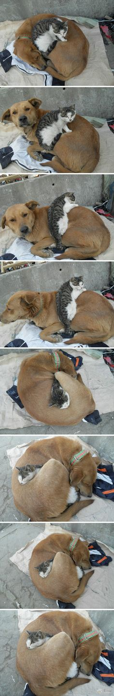 The love between dog and cat-how's that for a hug?