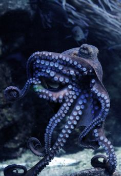 purple octopus flying in the deep sea