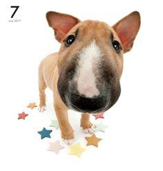 Artlist Collection THE DOG Bull Terrier calendar