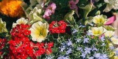 10 λουλούδια που ανθίζουν τον Μάιο σε κήπο και σε γλάστρα -idiva.gr
