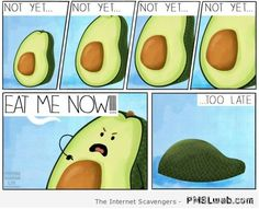 Get your laugh on to Hilarious Avocado Memes! Healthy Kids, How To Stay Healthy, Nutrient Dense Smoothie, How To Ripen Avocados, Avocado Cartoon, Cute Avocado, Pregnancy Care, Funny Photos, Natural Health