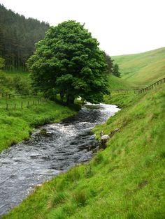 streams fences trees  sheeps