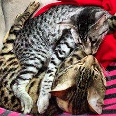 Nylah and Bambu kisses.
